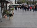 istanbul_102